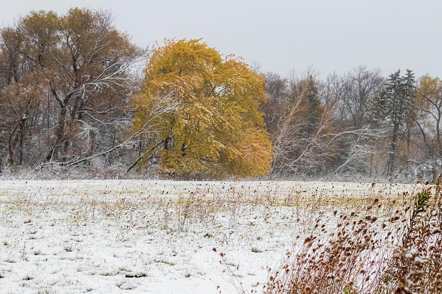 WinterFall by Terri Hart-Ellis