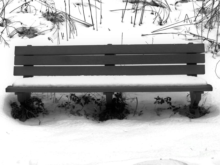 Winters Lonely Park Bench Photograph