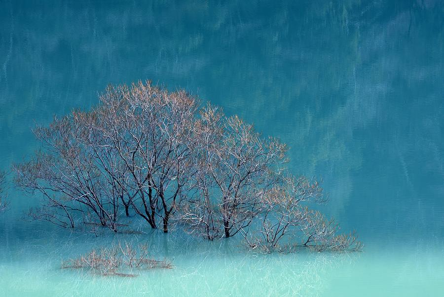 Wintry Trees Lake Reflection Painting