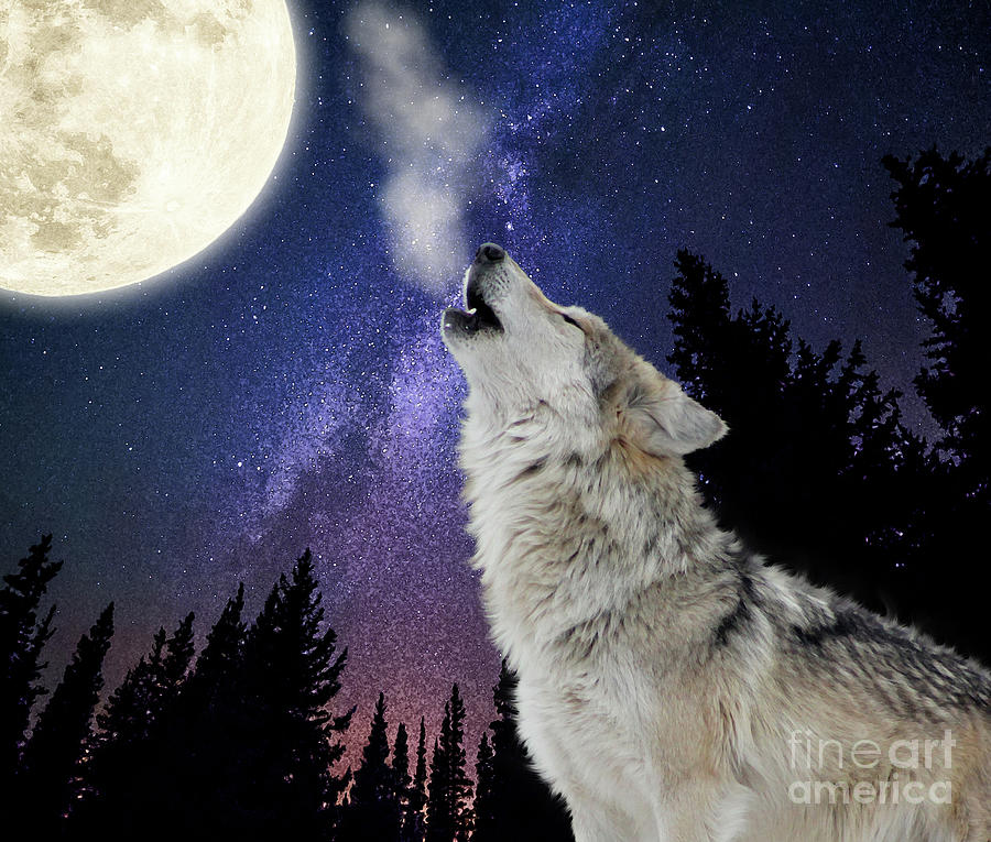 Wolf Howling At The Moon Wolf Moon Night Sky Stars Space Digital Art By Inspired Images