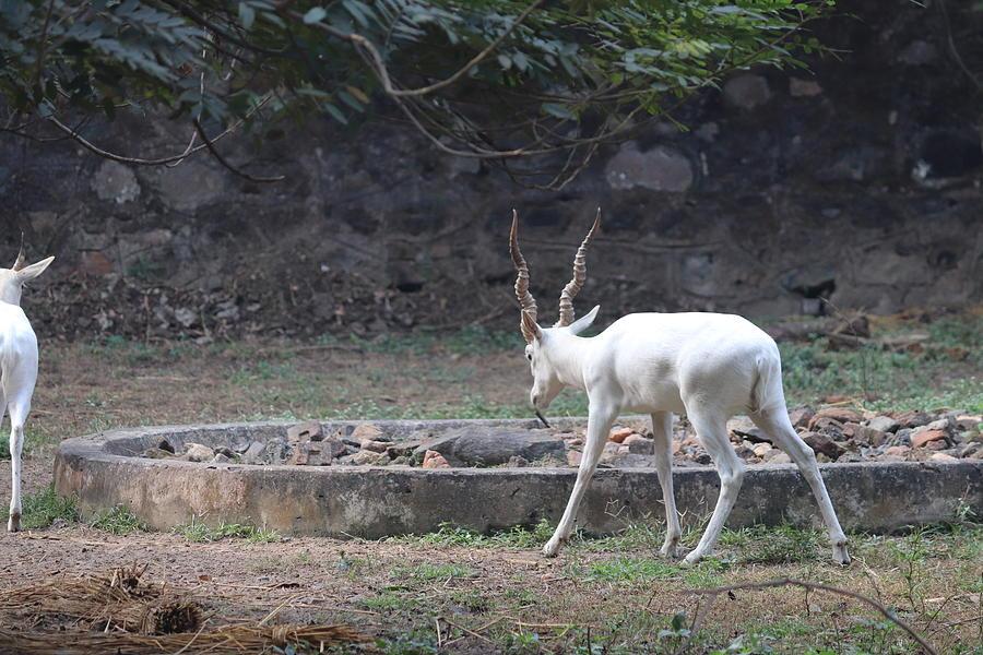 Wonderful Horns Photograph