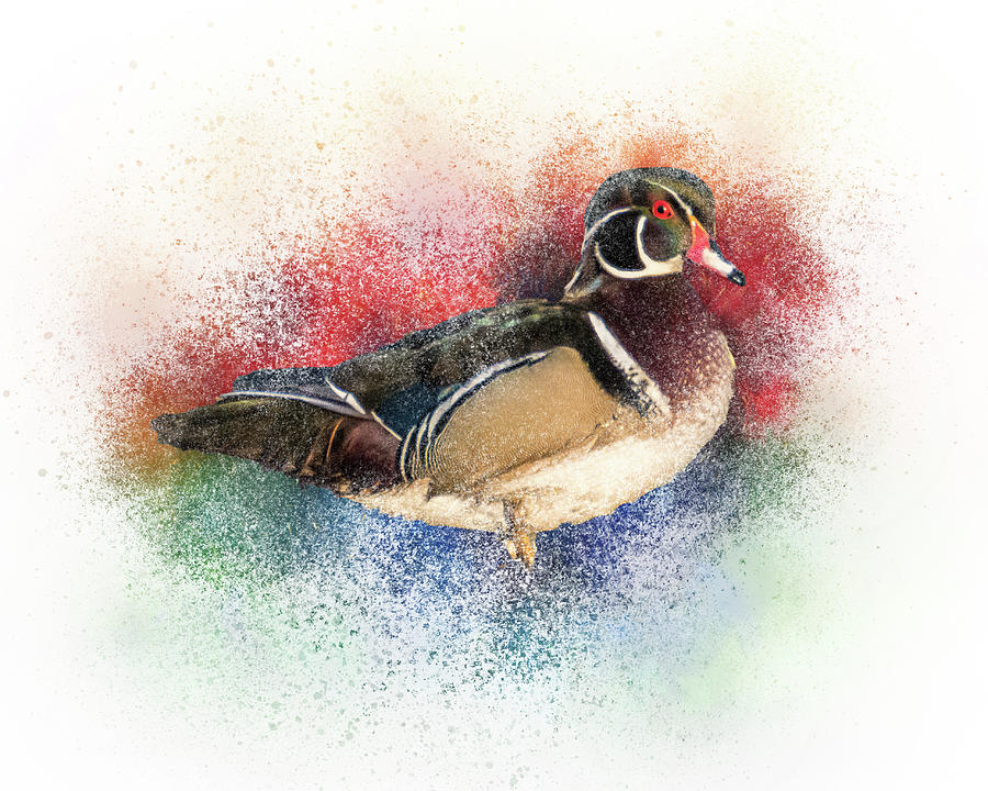 Wood Duck Color by Patti Deters