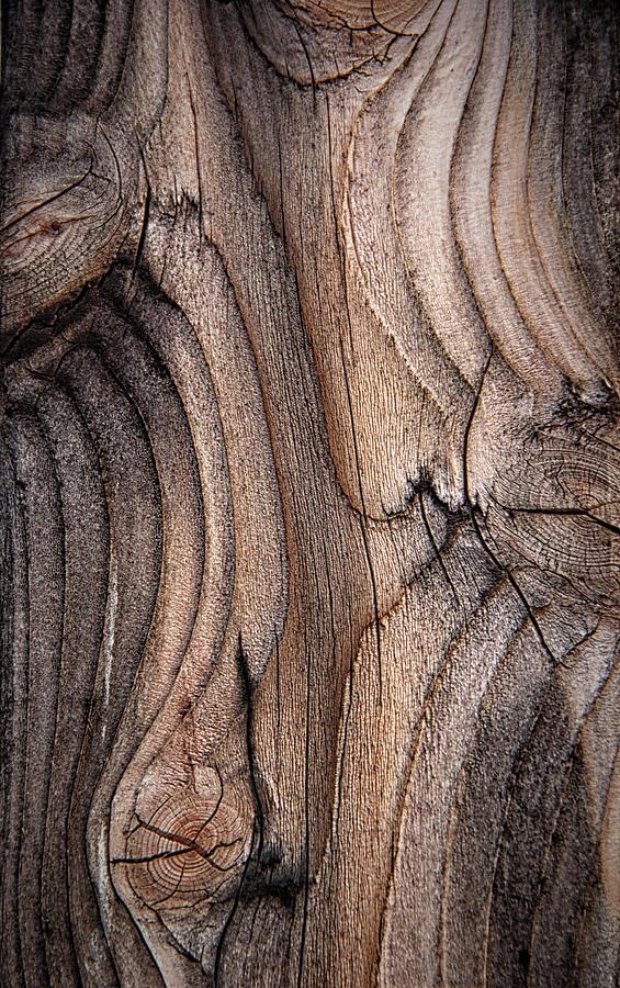 Wood Fencing by ELAINE MALOTT