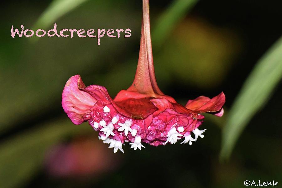 Woodcreeper Title Slide by Alan Lenk