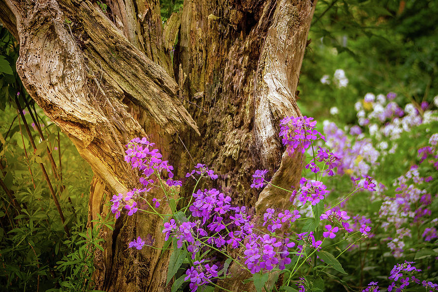 Wooded Wildflowers Photograph