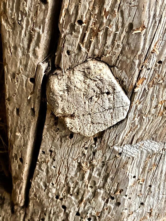 Wooden Peg by Ann E Robson