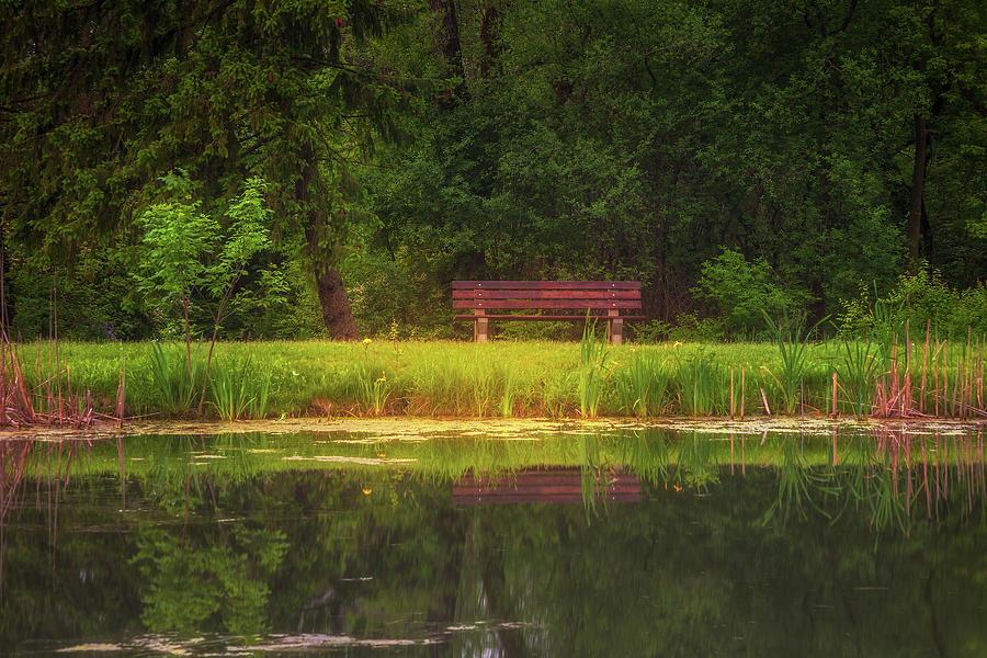 Woodland Reflections Photograph
