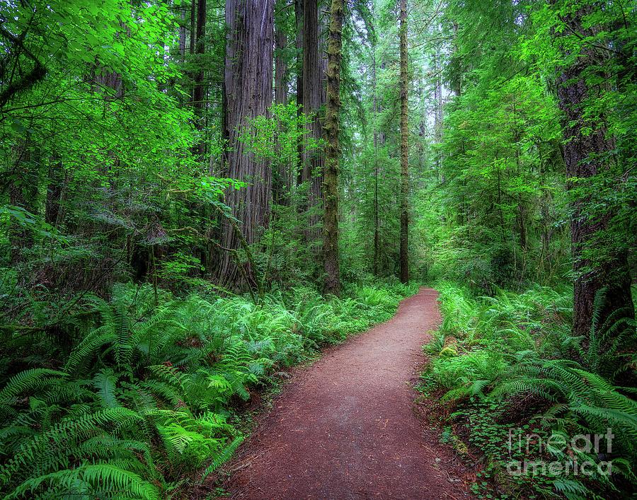 Woods by Izet Kapetanovic