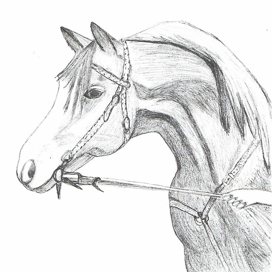 Horse Drawing - W.T. Crystal Image by Bonnie McKeegan