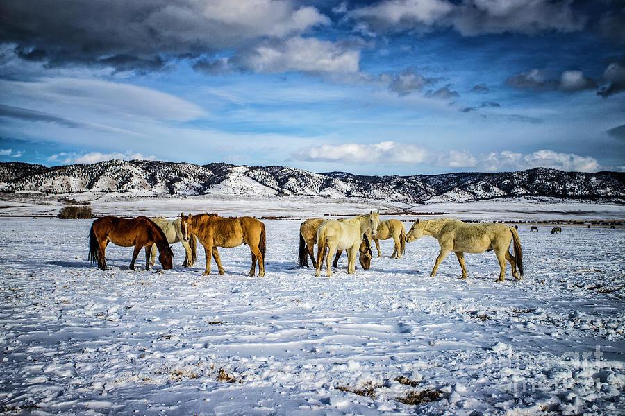 Wyoming Winter Photograph