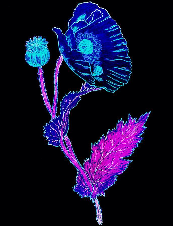 x-ray Flower Photograph