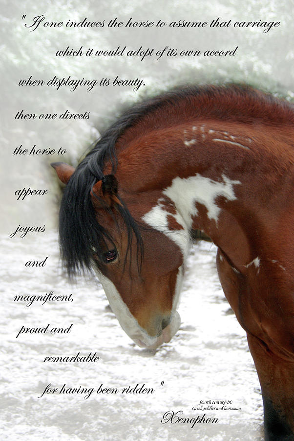 Xenophon Horsemanship Photograph