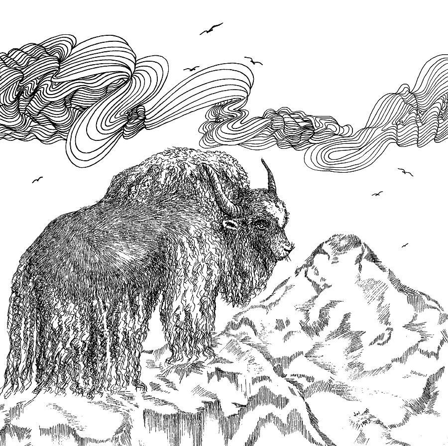 Yak Drawing