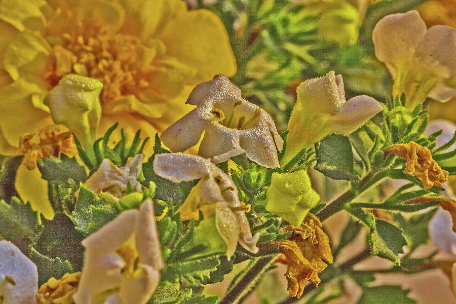 Yellow Brown White Flowers Stamen Pistil Greens July 2015 2 3262020 0039 Photograph by David Frederick