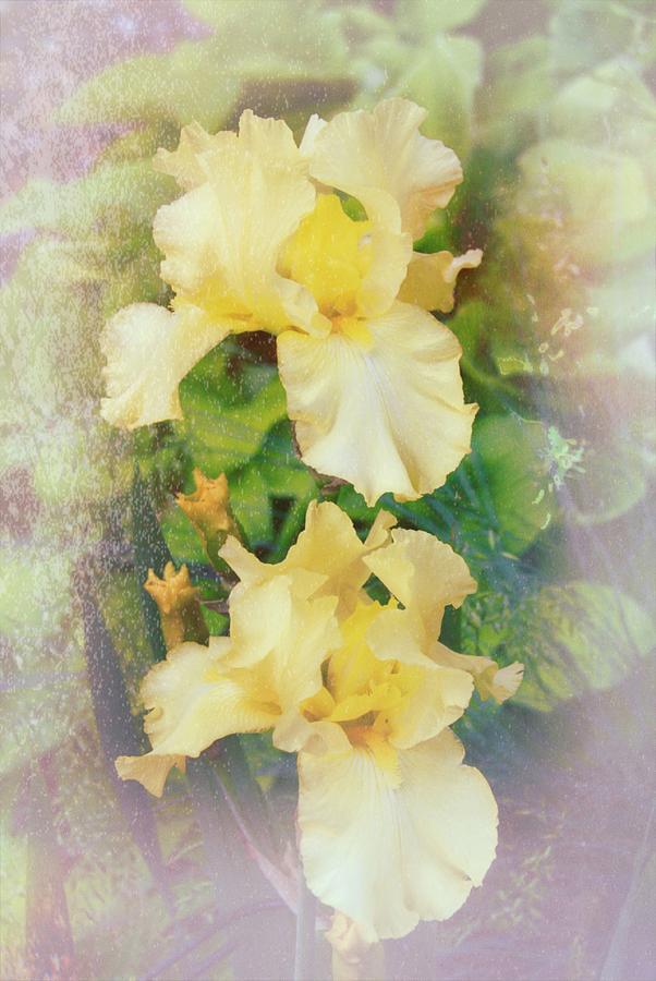 Yellow Delight 3 Photograph