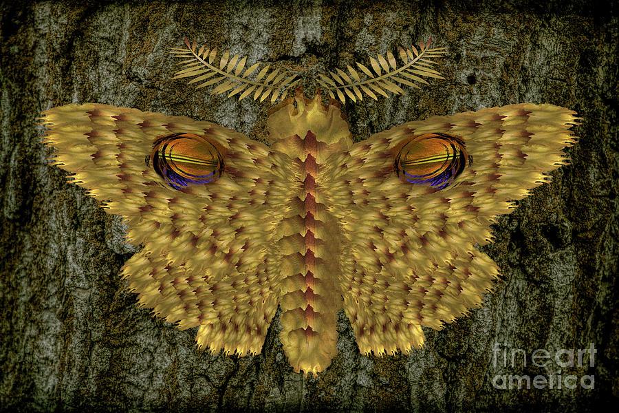 Yellow Eye Moth Photograph