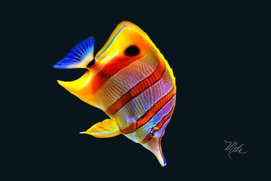 Yellow Fish by Meta Gatschenberger