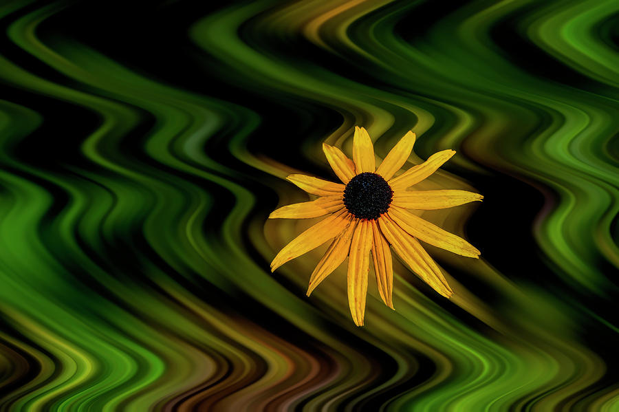 Yellow flower in focus in kaleidoscope background paintography by Dan Friend