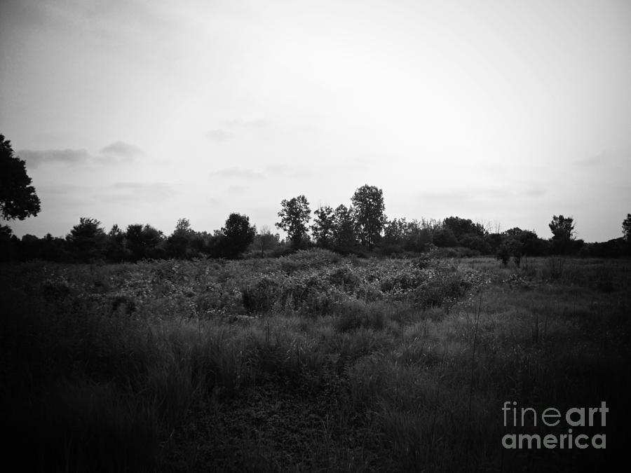 Wetlands Photograph - Yellow Flowers in the Field - Black and White - Frank J Casella by Frank J Casella