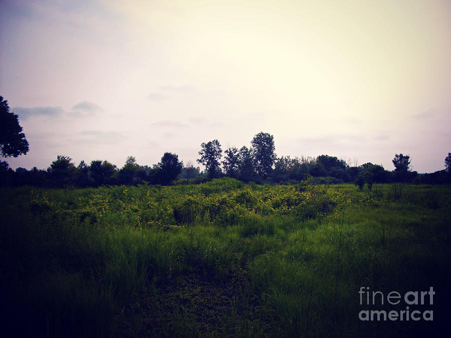 Wetlands Photograph - Yellow Flowers In The Field by Frank J Casella by Frank J Casella