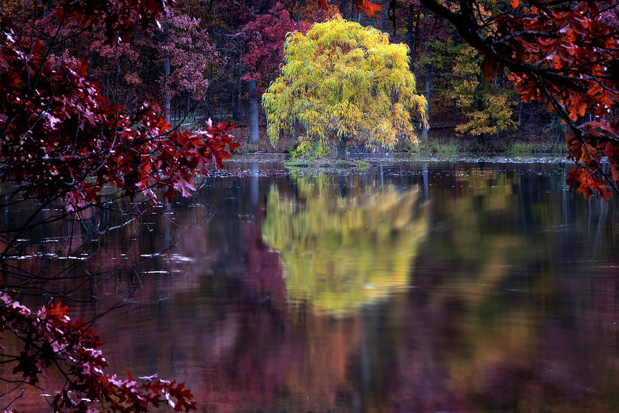 Yellow Reflection by Tom Singleton
