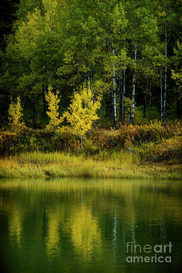 Yellow Reflections Photograph