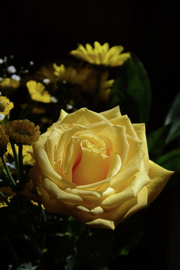 Yellow Rose Of Joy Photograph