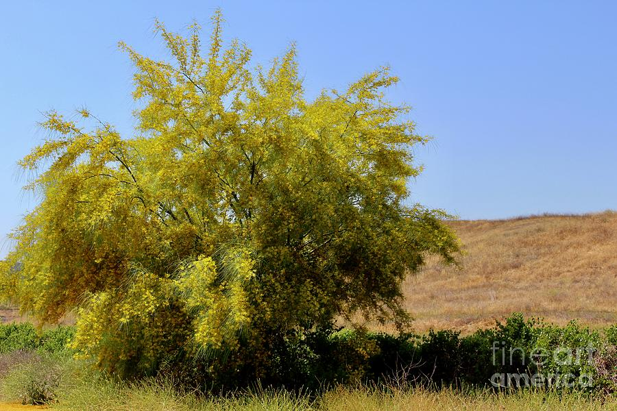Yellow Tree Along The Roadside Photograph