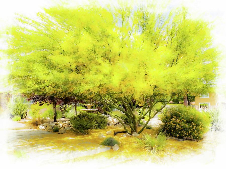 Yellow Tree Blossoms Photograph