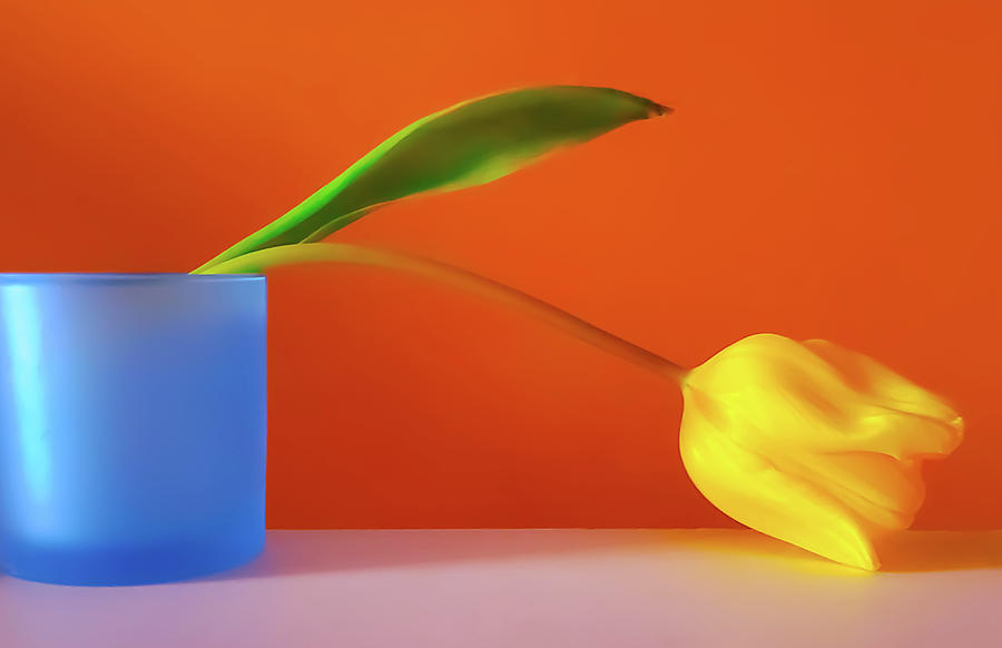 Artwork Photograph - Yellow Tulip Still Life by Joan Han