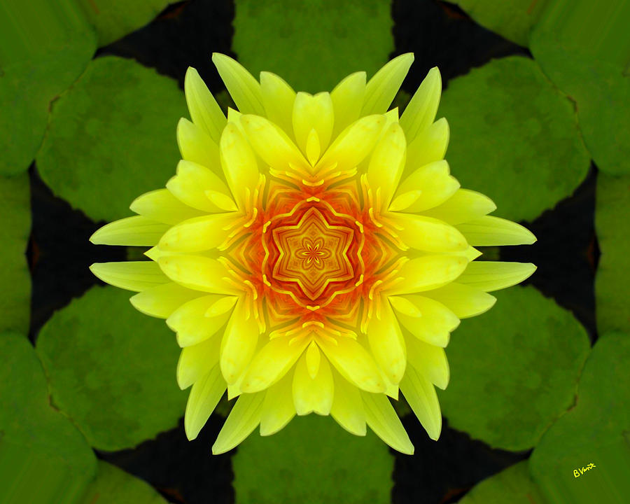 Yellow Digital Art - Yellow Water Lily  by Bonnie Vent