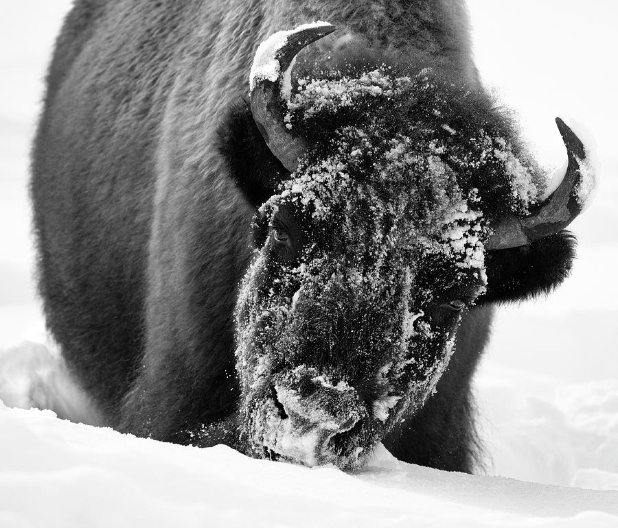 Yellowstone Snowplow by Art Cole