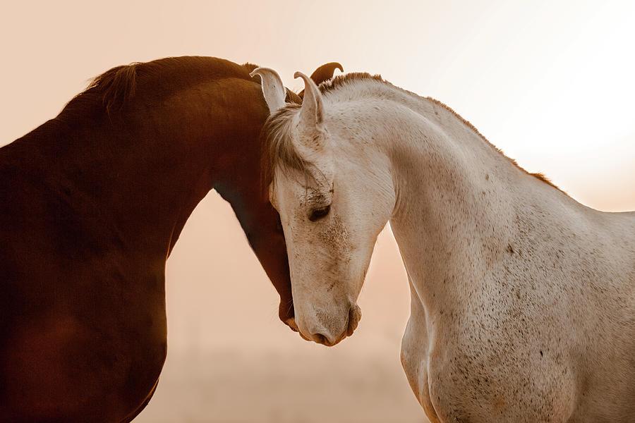 Marwari Photograph - Yin and Yang by Picstoriesbymmk Photography