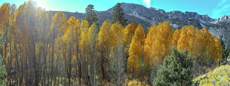 Yosemite Tioga Pass by Mike Gifford