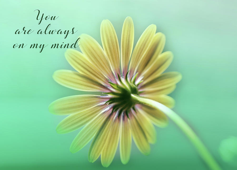 You Are Always On My Mind Photograph