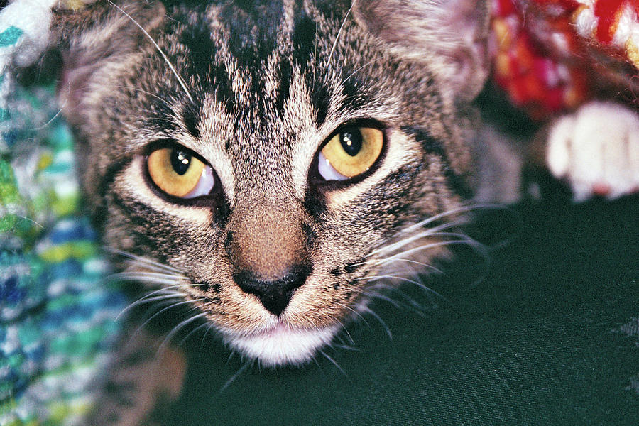 Cat Photograph - You Will Give Me Catnip by Robin Shwedo