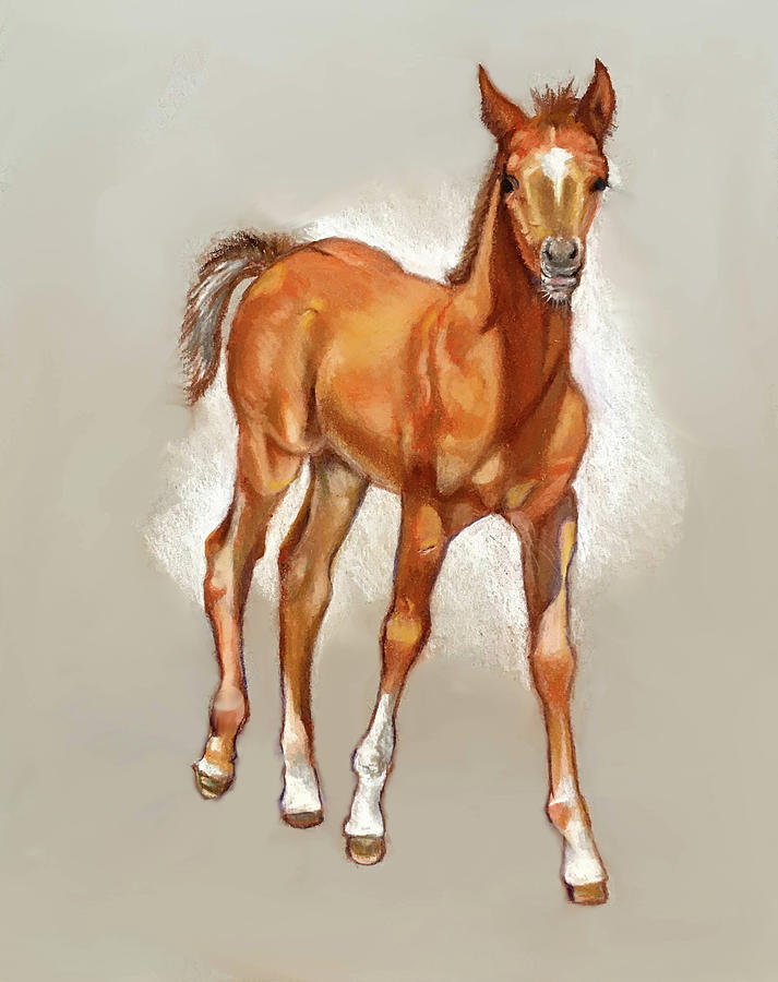 Young Foal In Pastel Drawing