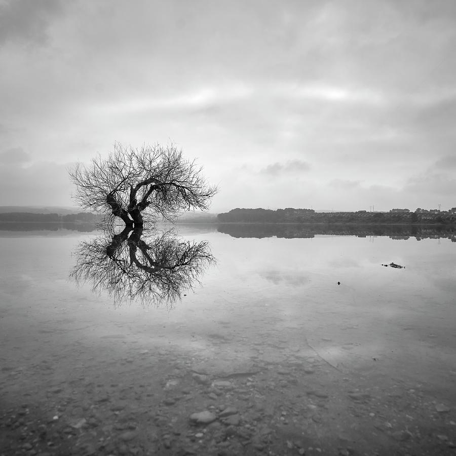 Mono Photograph - Zen Tree. . Bw. Square by Guido Montanes Castillo