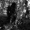 A Forgotten Corner Remembered by John Bradburn