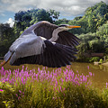 A Heron Flies by Rob Lester