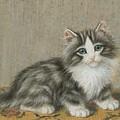 A Kitten On A Table by  Burkhard Flury