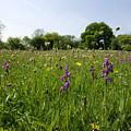 Ancient Hay Meadow by Bob Kemp