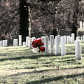 Arlington Cemetary by Clayton Bruster