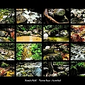' Australia Rocks ' Mossman Gorge - North Queensland by Lexa Harpell