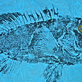 Black Sea Bass - Rockfish - Grouper by Jeffrey Canha