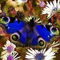 Blue Butterfly by Sergey Lukashin