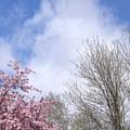 Blue Skies 3 by Elva Kimble