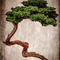 Bonsai by Tom Gari Gallery-Three-Photography