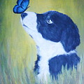 Border Collie by Andreea Moldovan