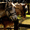 Carriage Ride by Kim Henderson